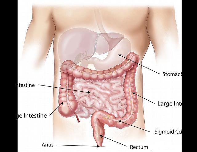 anatomie člověka
