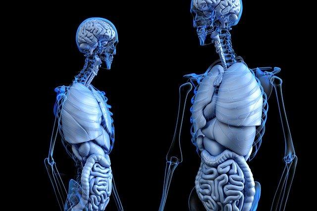 anatomické těla