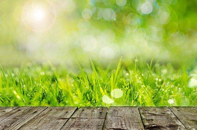 steblá trávy.jpg