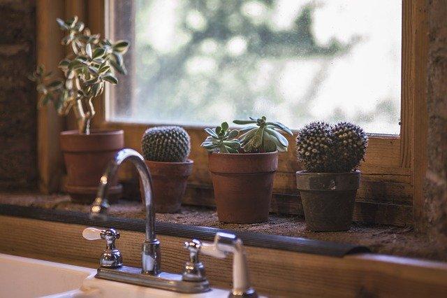 kaktusy v črepníkoch na parapete.jpg
